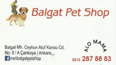 BALGAT SCOTTİSH FOLD