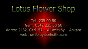 LOTUS FLOWER SHOP
